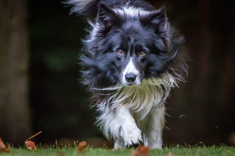 Jak często odrobaczać psa?