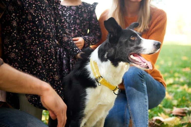 Najinteligentniejsze rasy psów
