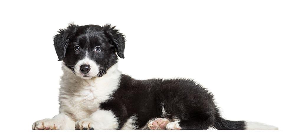 Imiona dla psów - podstawowe zasady wyboru