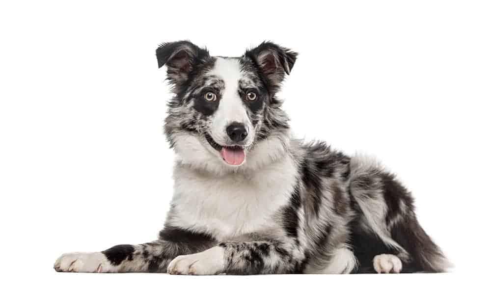 Jakie imię dla jakiego psa?