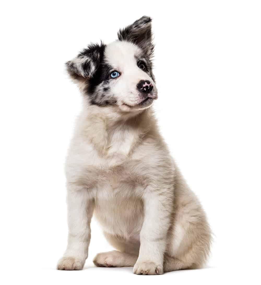 Czym kierować się przy wybieraniu psich imion?