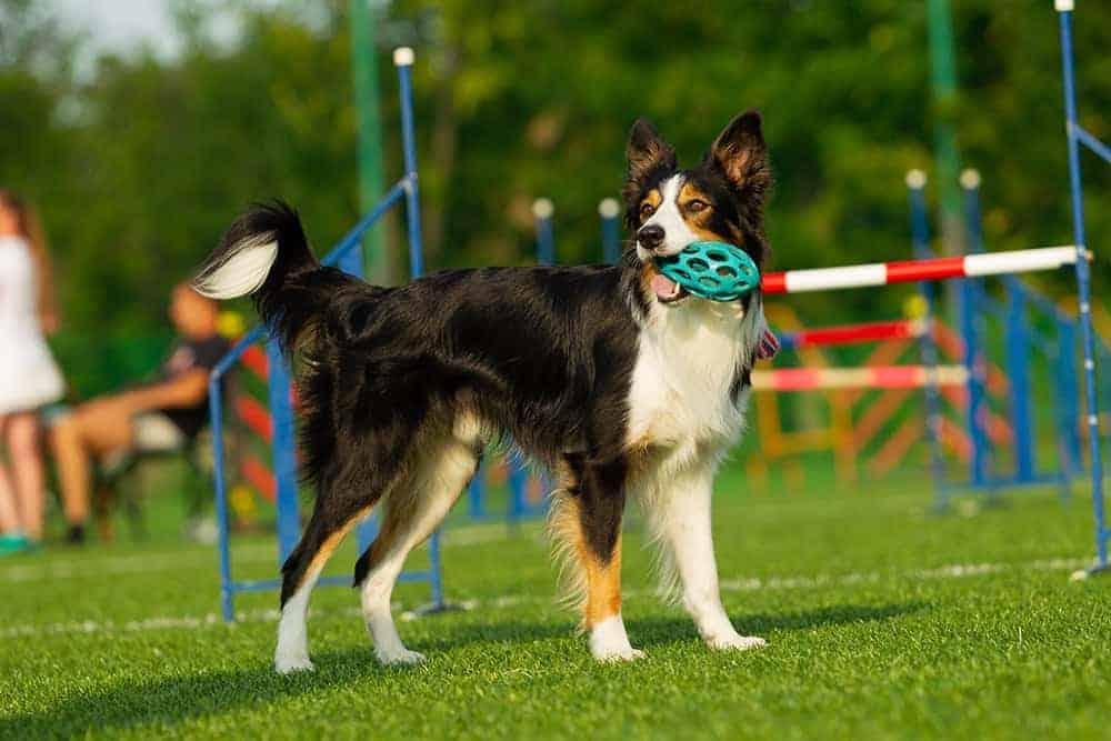 Czy warto udać się do szkoły trenerskiej z psem?