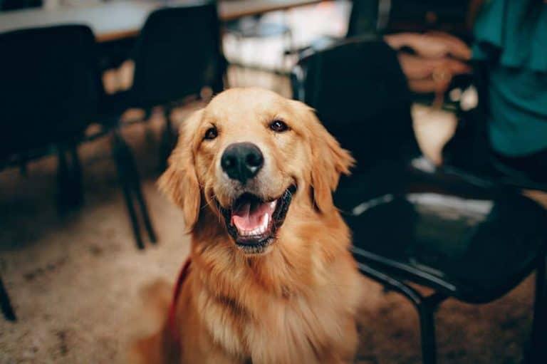 Sucha karma dla psa – czy może stanowić bazę psiej diety?